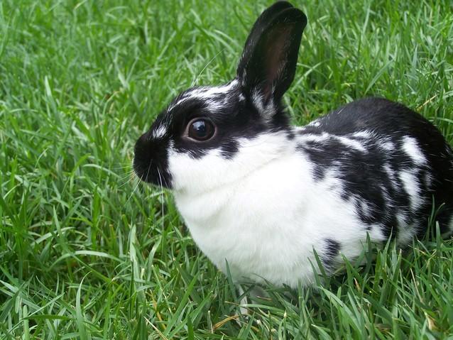 5 Popular Pet Rabbit Breeds For Families Petland Texas