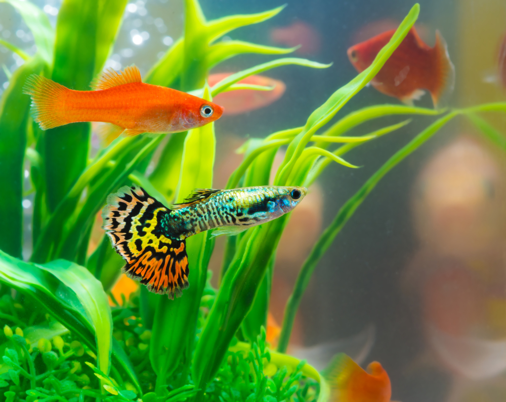 Top 10 Best Freshwater Fish For Your Aquarium – Petland Texas
