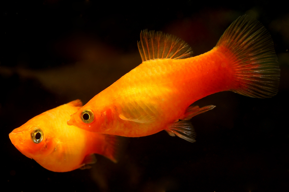 Top 10 Best Freshwater Fish For Your Aquarium Petland Texas