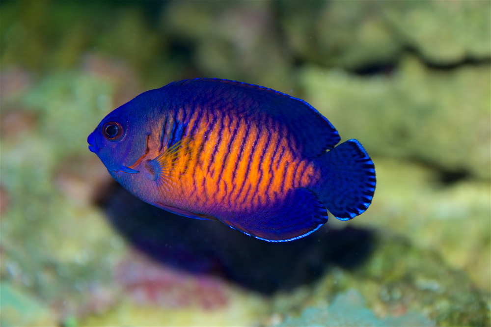 Top 7 Best Saltwater Aquarium Fish For Beginners Petland Texas